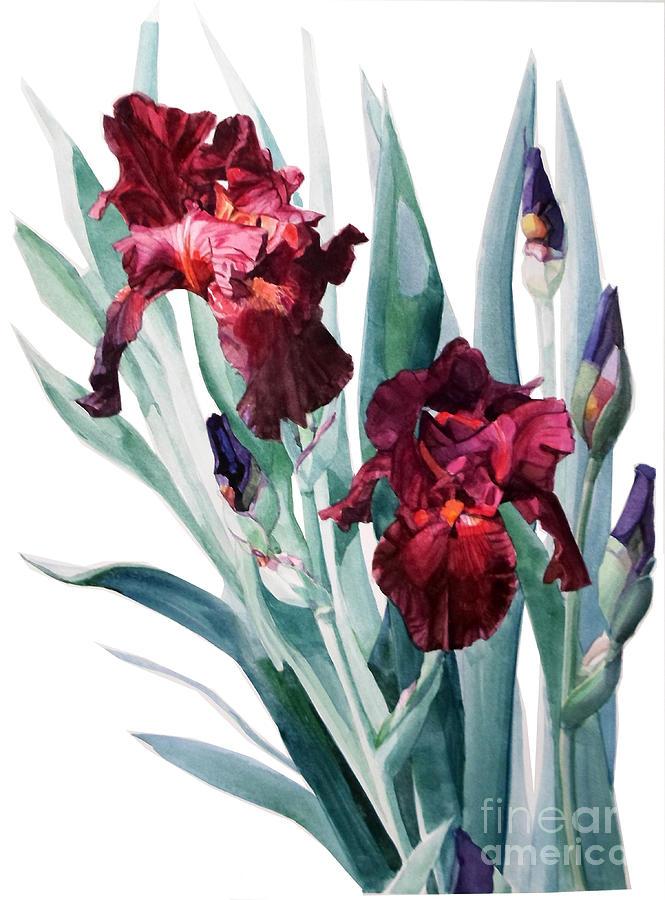 Dark Red Tall Bearded Iris Donatello Painting