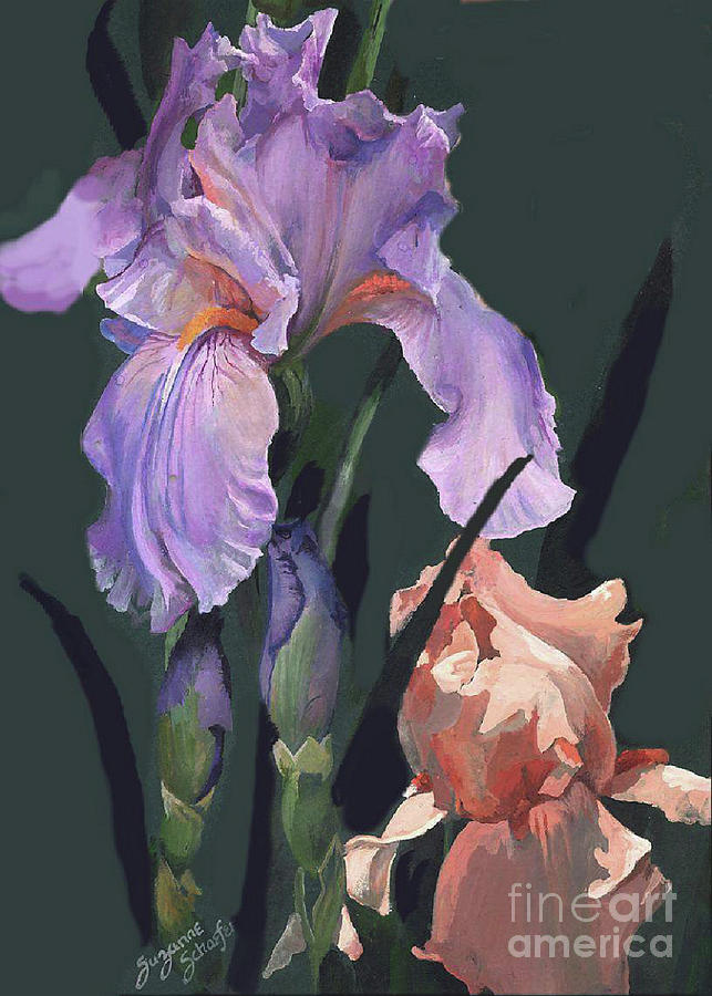 Flowers Painting - Iris Study by Suzanne Schaefer