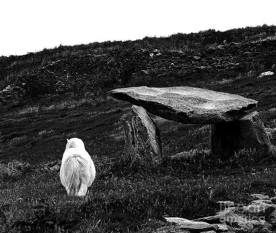 Ireland Photography Photograph - Irish Standing Stones by Patricia Griffin Brett