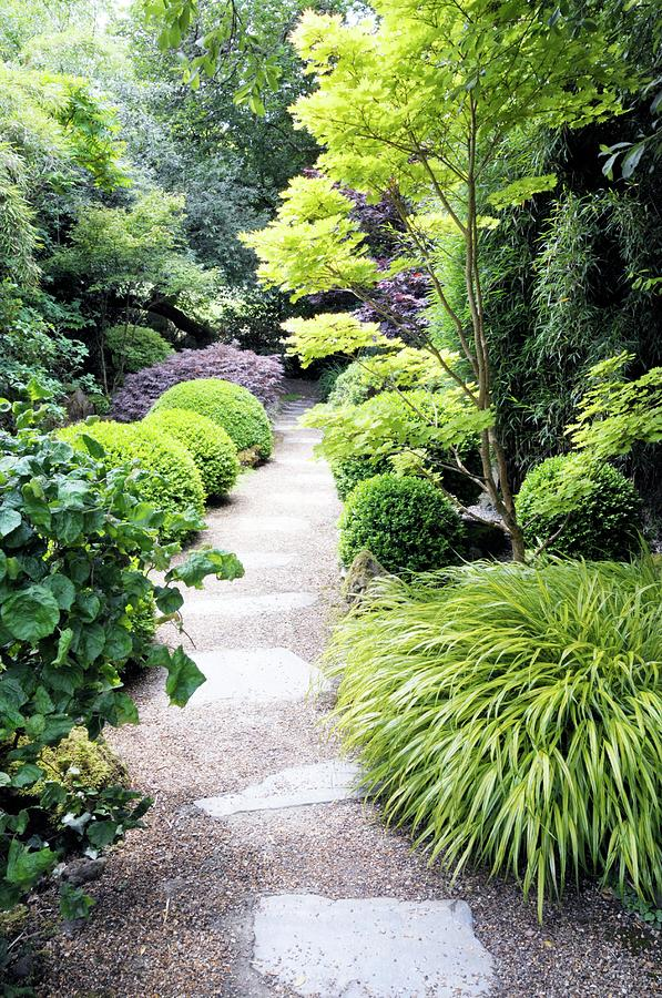 Plant Photograph - Japanese Garden by Anthony Cooper/science Photo Library