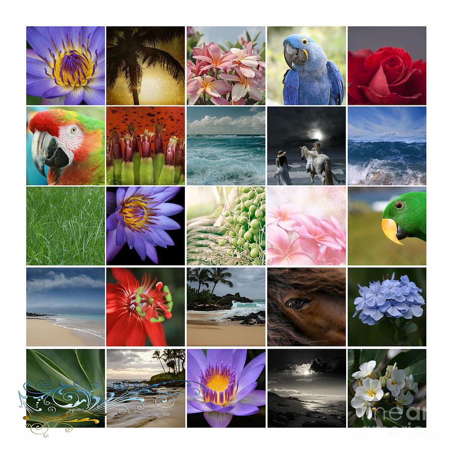 Aloha Photograph - Journey Of Discovery by Sharon Mau