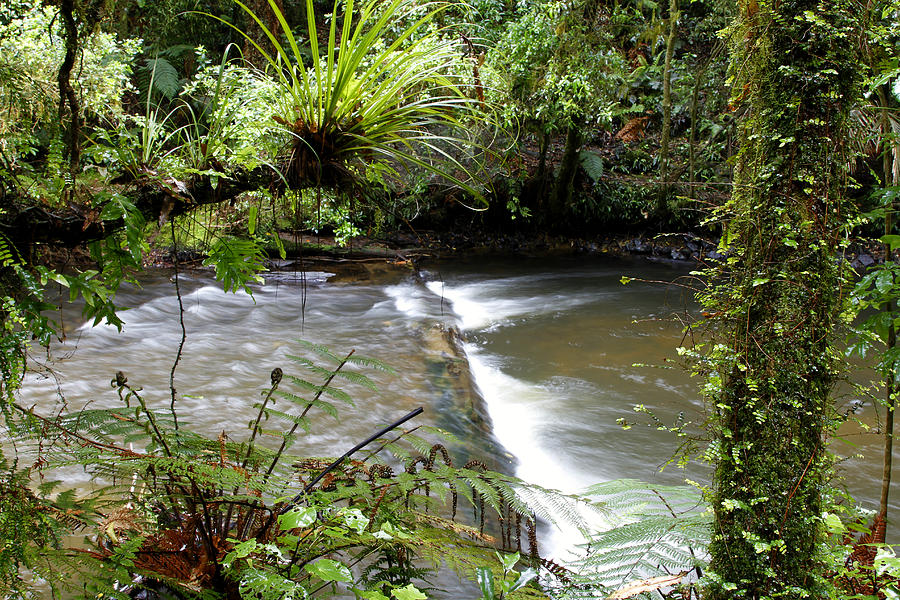 Stream Photograph - Jungle Stream  by Les Cunliffe