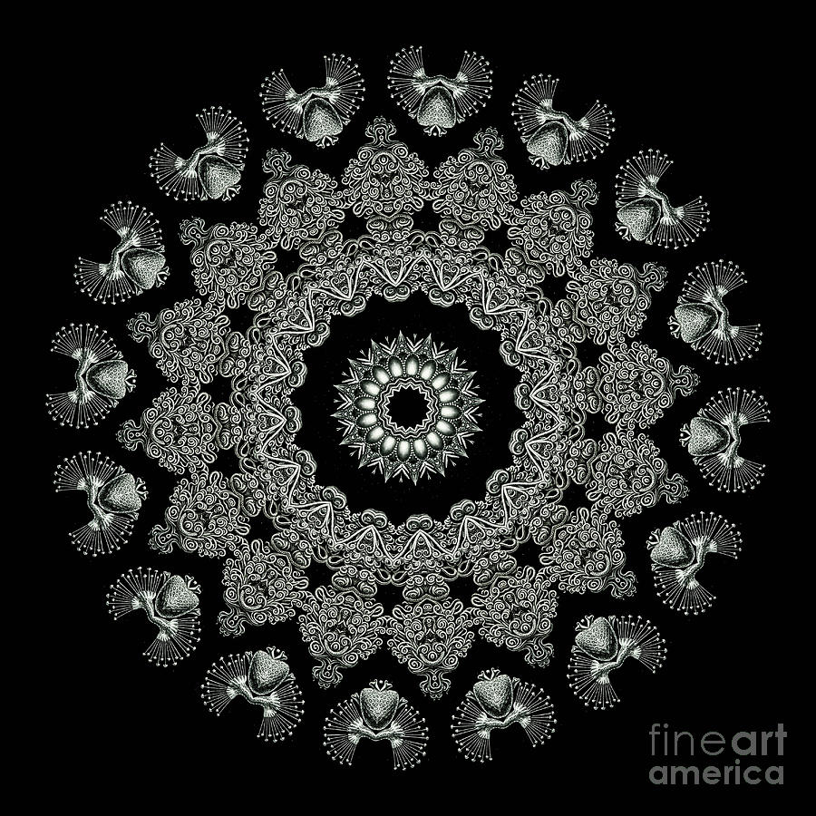 Ernst Haeckel Photograph - Kaleidoscope Ernst Haeckl Sea Life Series Black And White Set 2 by Amy Cicconi
