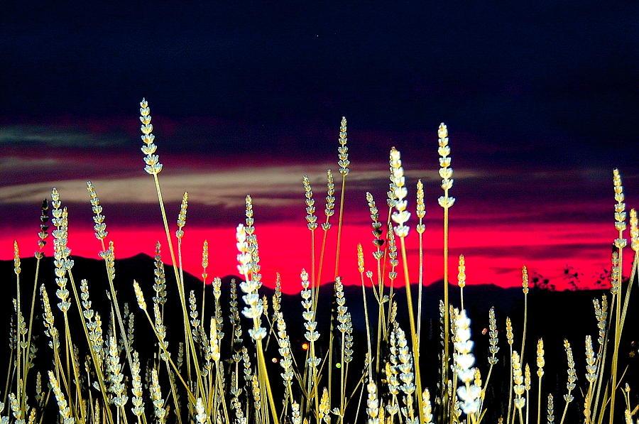 Lavender Photograph - Lavender Sunset by Mavis Reid Nugent