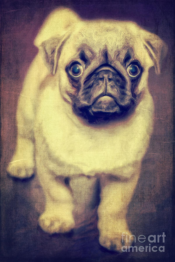 Grass Photograph - Little Dog by Angela Doelling AD DESIGN Photo and PhotoArt