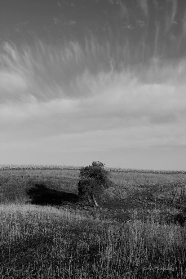 Landscape Photograph - Lonely In The Field by Robert Geier