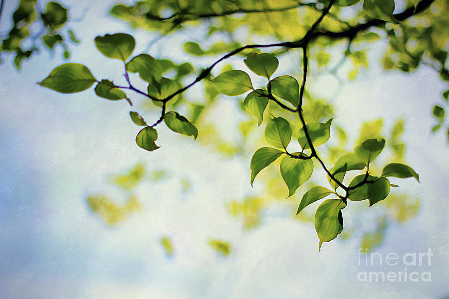 Background Photograph - Looking Up by Darren Fisher