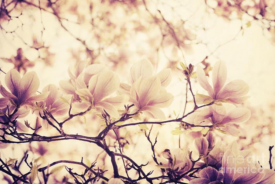 Magnolia Pyrography - Magnolia by Jelena Jovanovic