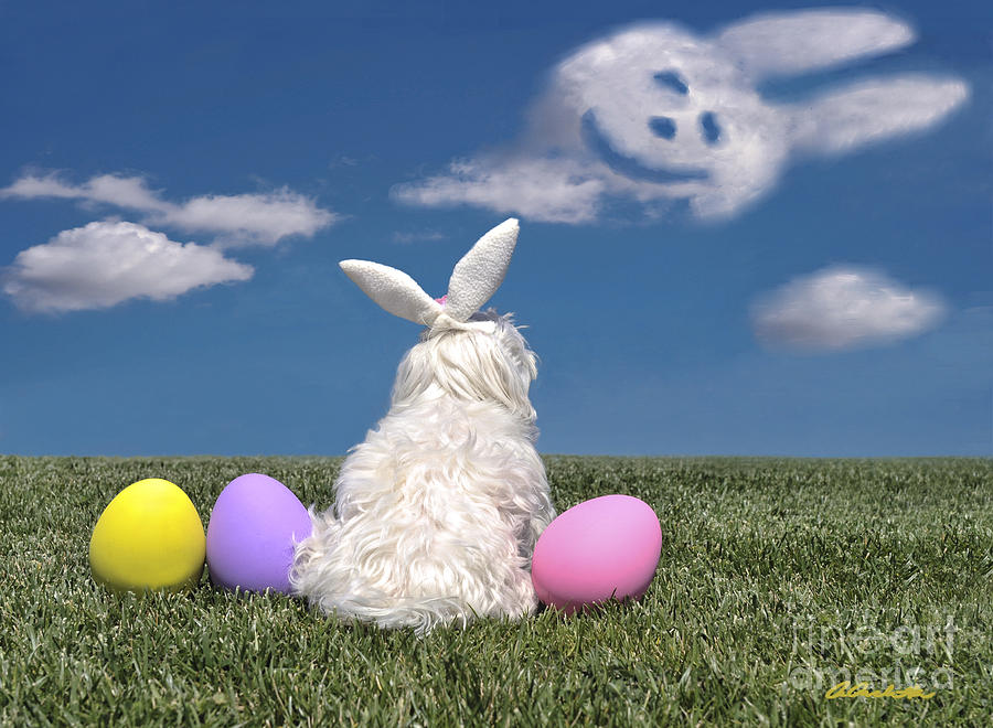 Maltese Easter Bunny by Andrea Auletta