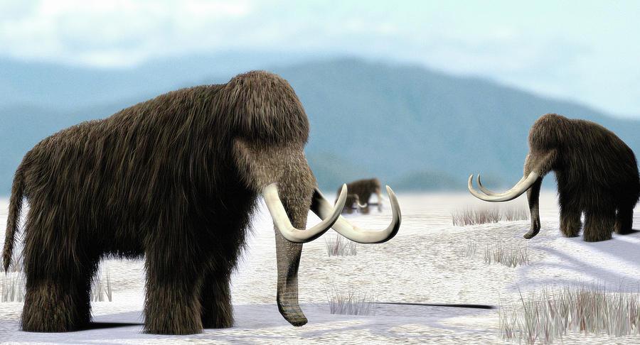 Mammuthus Photograph - Mammoth by Christian Darkin