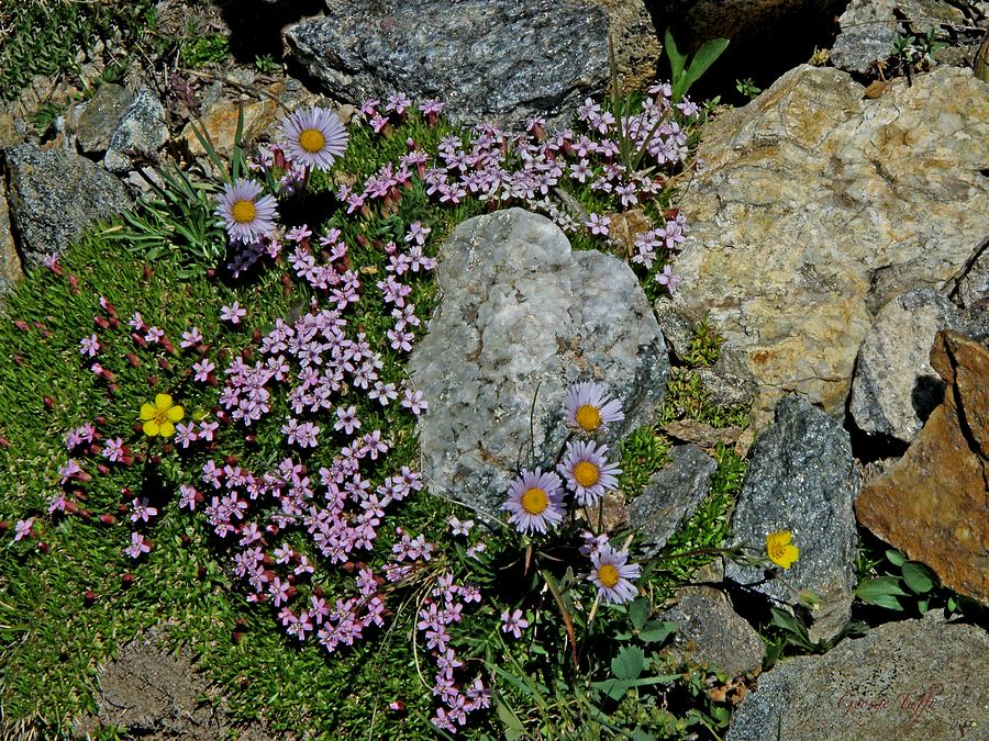 Rockgarden Photograph - Miniature Rock Garden by George Tuffy
