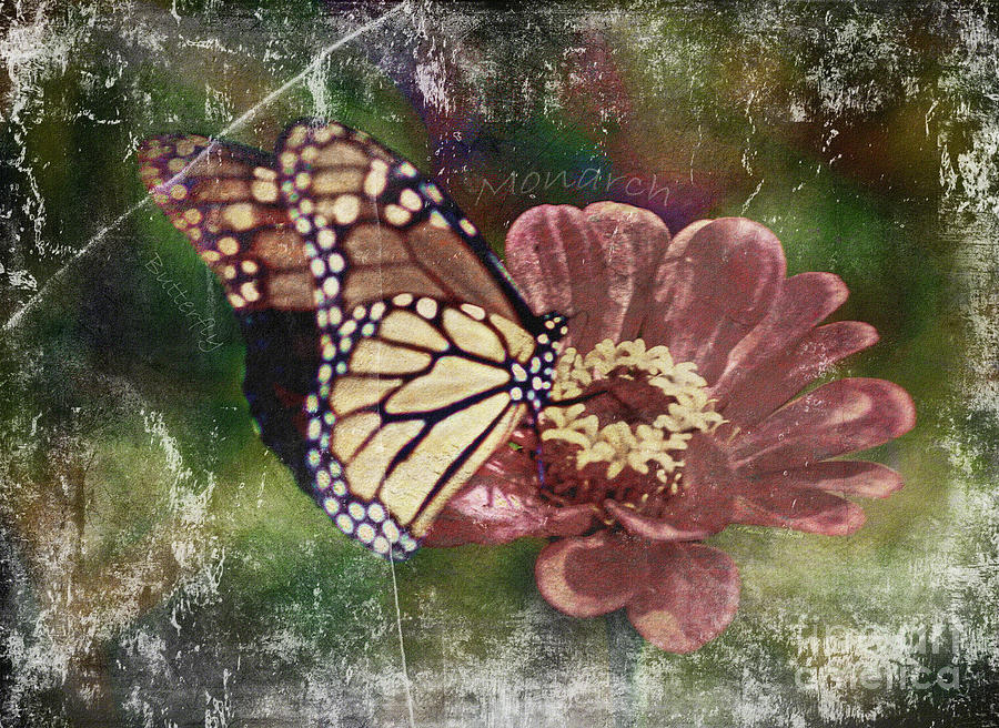 Monarch- butterfly mixed media photo composite by Patricia Griffin Brett