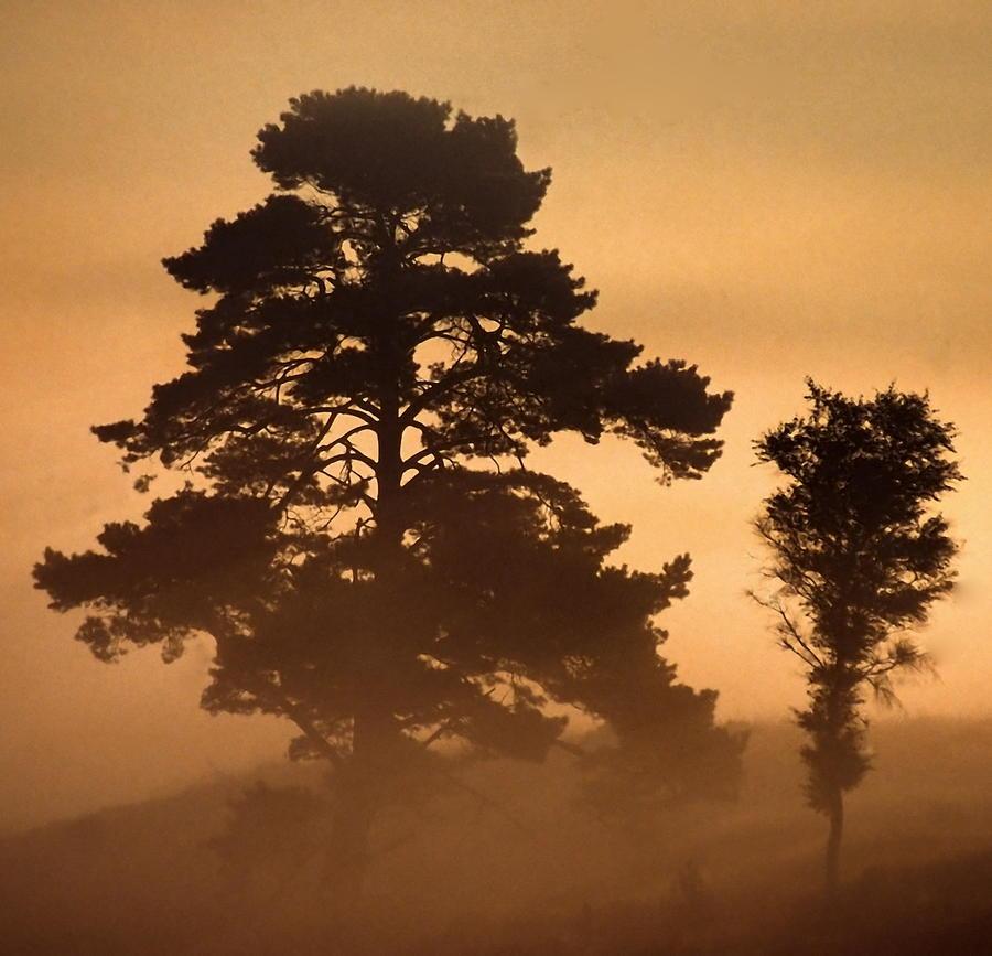 Heath Photograph - Moorland In The Morning Mist Netherlands by Ronald Jansen
