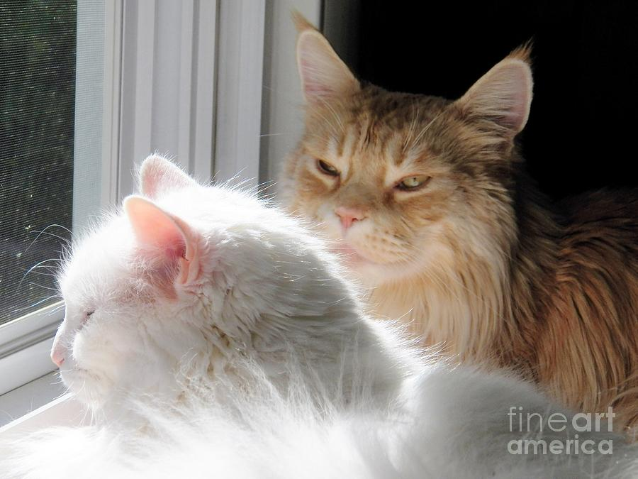 Cats Photograph - My Eyes Adore You by Judy Via-Wolff
