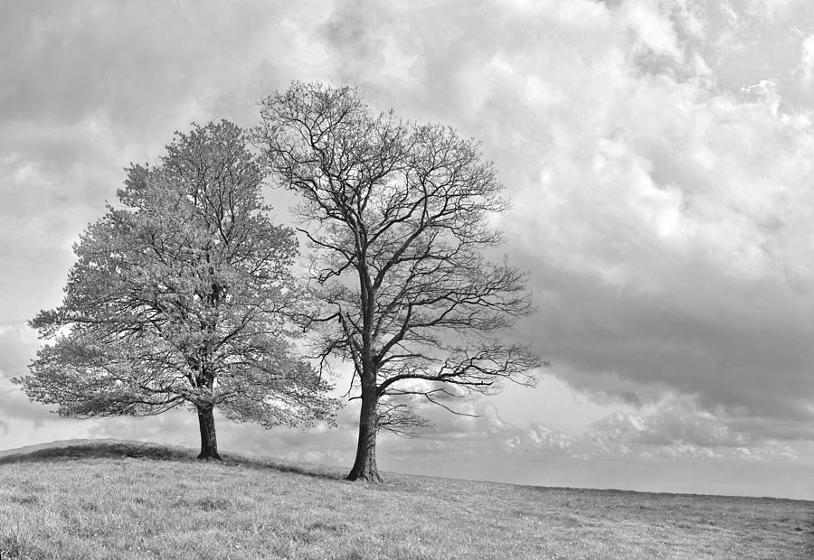 Alive Photograph - Old Lovers by Sebastien Coursol