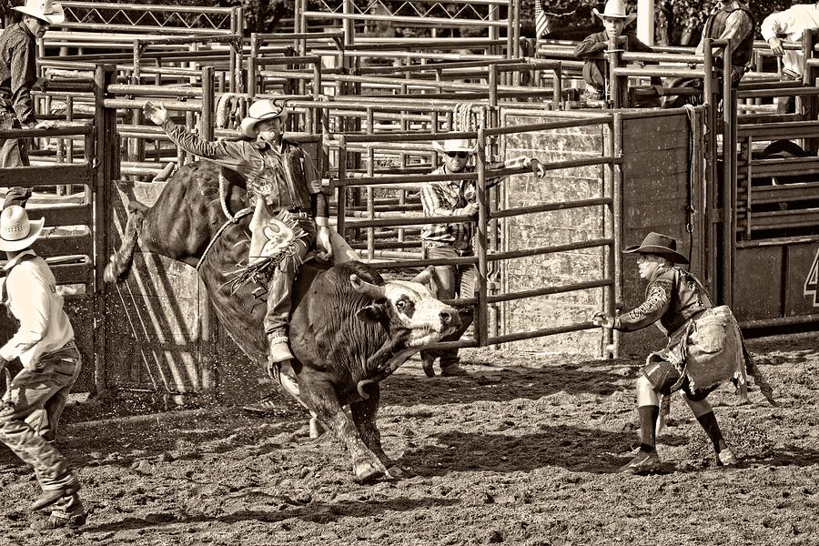 Bullriding Photograph - Ole Whitey by Alice Gipson