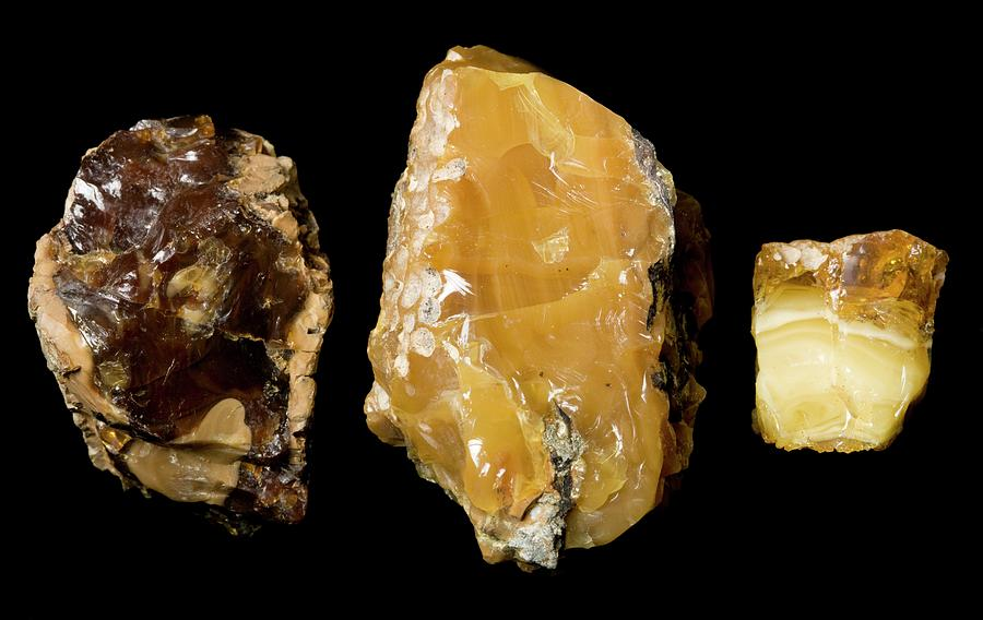 Mineral Photograph - Opaque Amber by Pascal Goetgheluck/science Photo Library