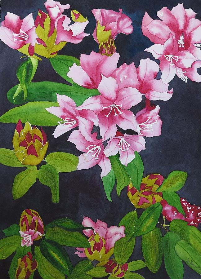 Rhododendrons Painting - Opening Day by Sylvia Dorling
