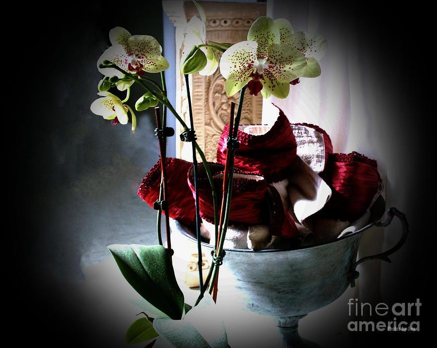 Orchids Digital Art by Jinx Farmer