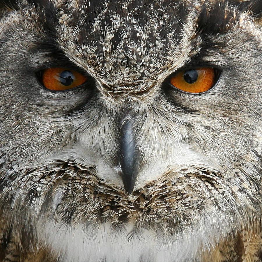 Owl Photograph - Owl 2 by Gillian Dernie