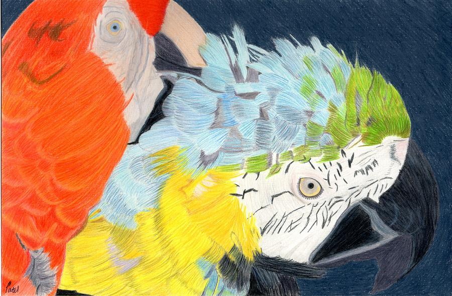 Parrots Drawing - 2 Parrots by Bav Patel