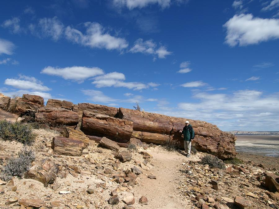 Biological Photograph - Petrified Forest, Argentina by Science Photo Library