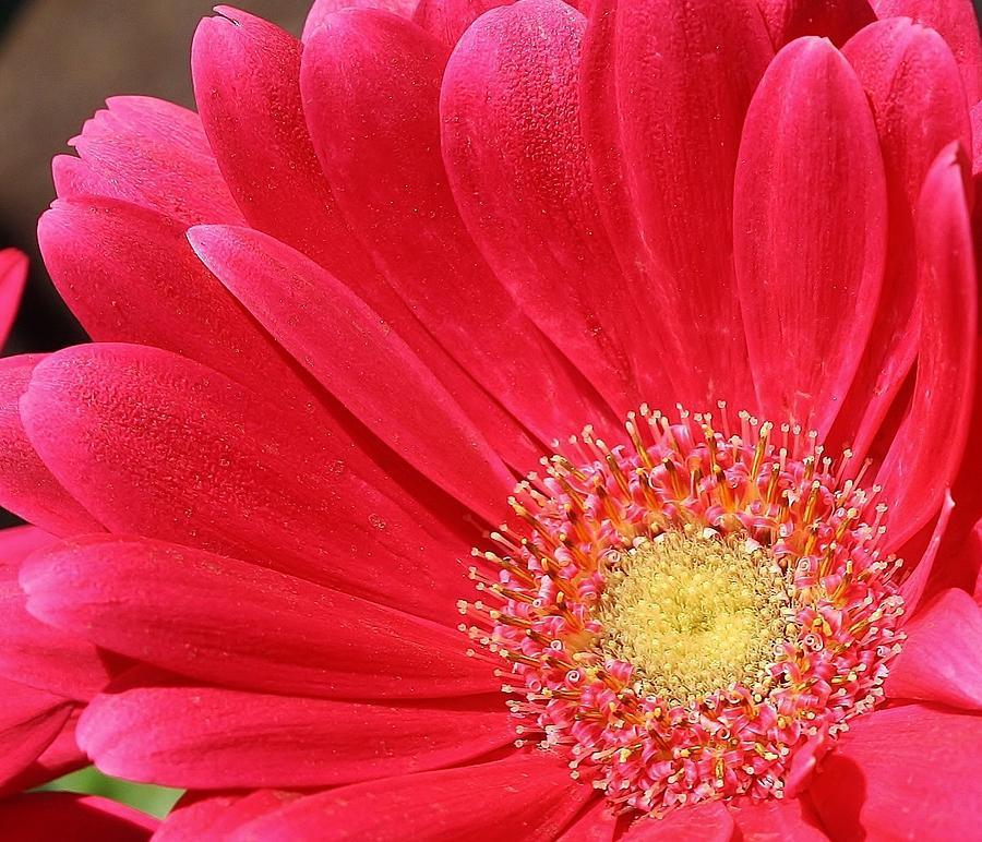 Flora Photograph - Pink Sensation by Bruce Bley