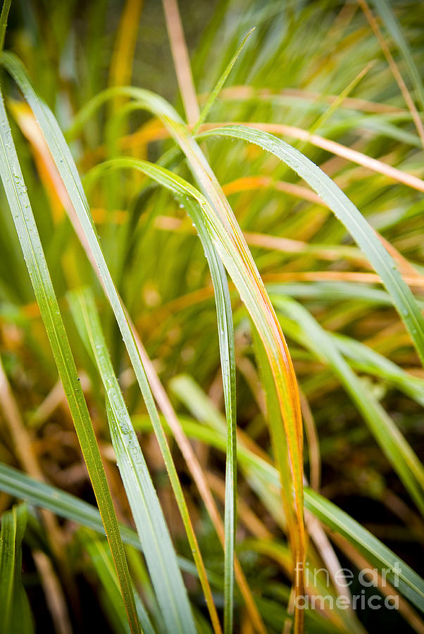 Clean Photograph - Plant Details by Tim Hester
