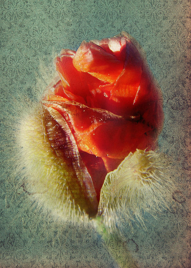 Colorful Flowers Photograph - Poppy by Heike Hultsch