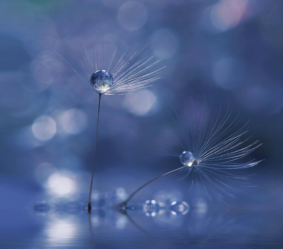 Macro Photograph - Prism Of Life... by Juliana Nan
