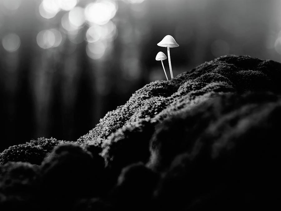 Psychedelic Mushrooms Photograph by Misha Kaminsky