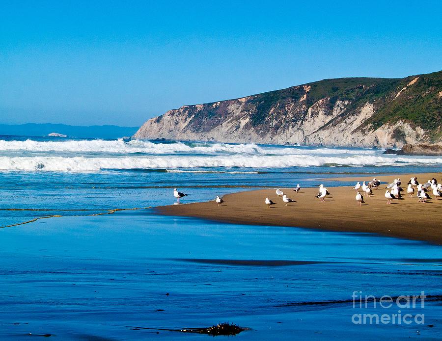 Pt Reyes National Seashore Photograph