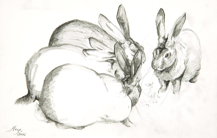 Farmyard Animals Drawing - Rabbits by Jeanne Maze