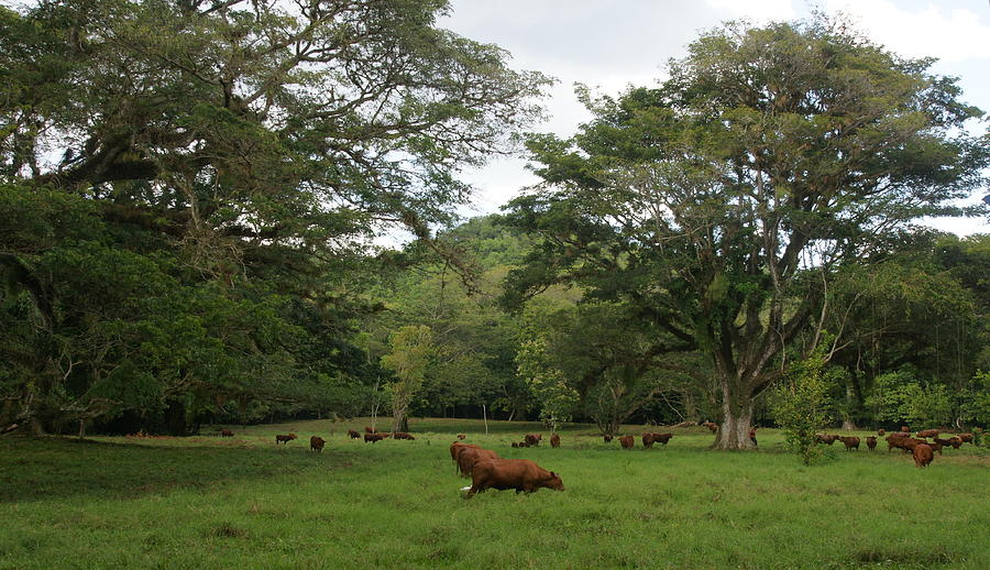 Rainforest Photograph - Rainforest At Ys River by Olaf Christian
