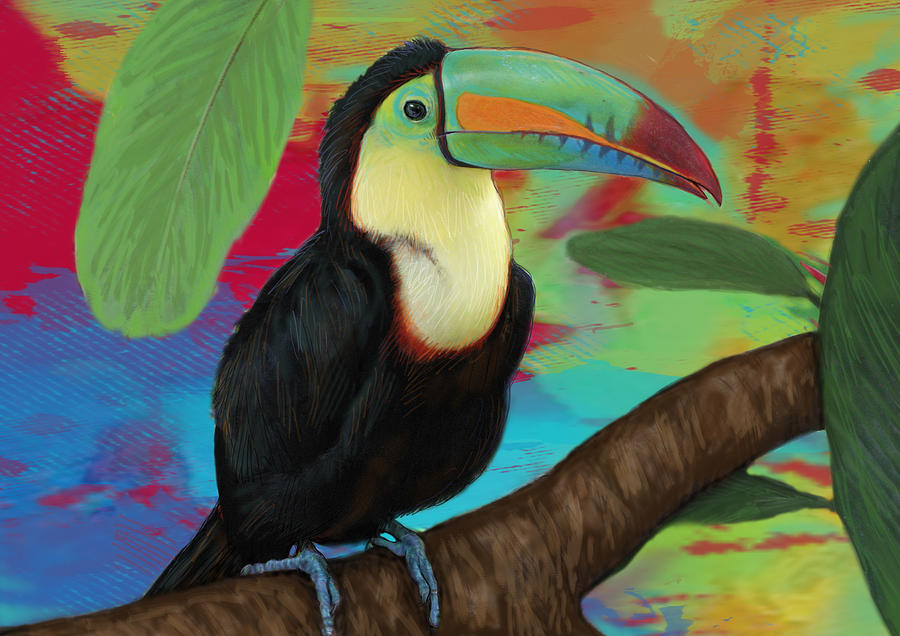 Rainforest Bird - Keel Billed Toucan Stylised Pop Art Drawing Potrait Poser Drawing By Kim Wang