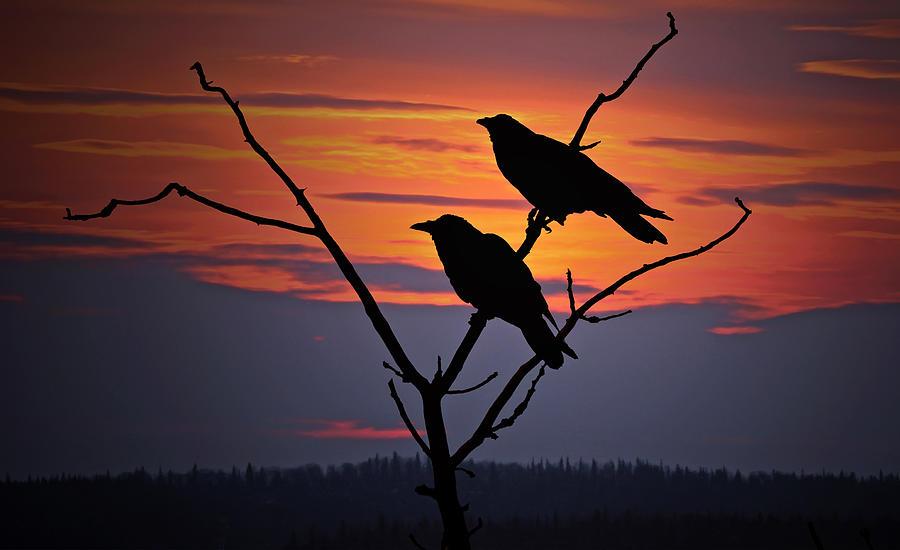 Raven Photograph - 2 Ravens by Ron Day