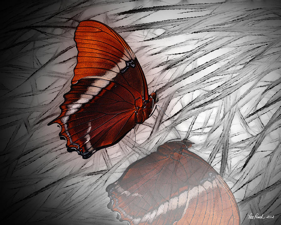 Red Butterfly Digital Art by Patti Parish