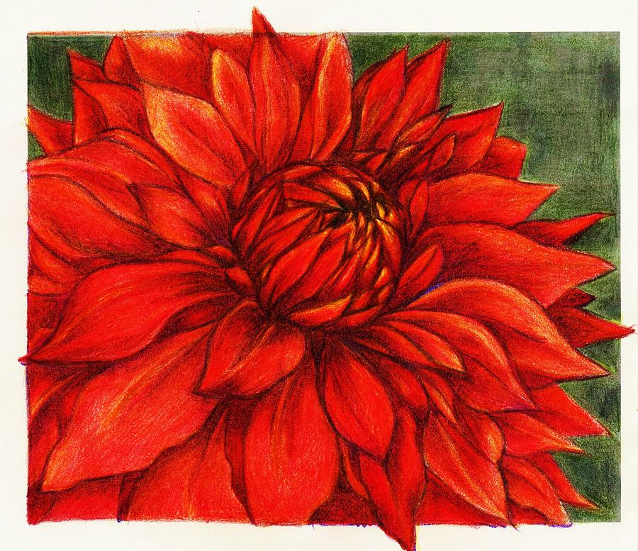 Flower Drawing - Red Mums by Rae Chichilnitsky