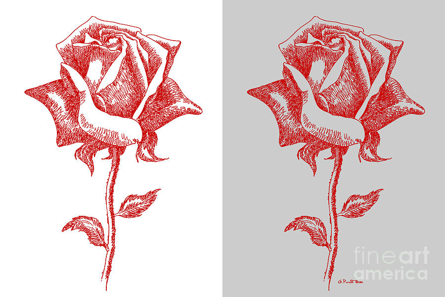 Black Painting - 2 Red Roses Poster by Gordon Punt