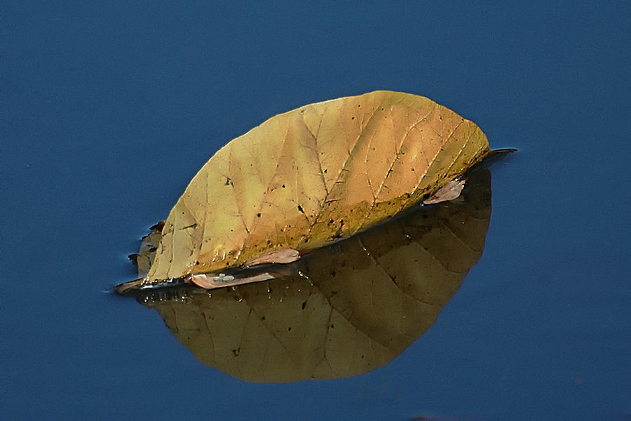 Holmdel Park Photograph - Reflection Of Fall by Gary Slawsky