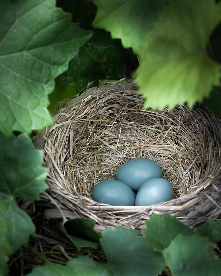 Robin Photograph - Robin Egg Blues by James Barber