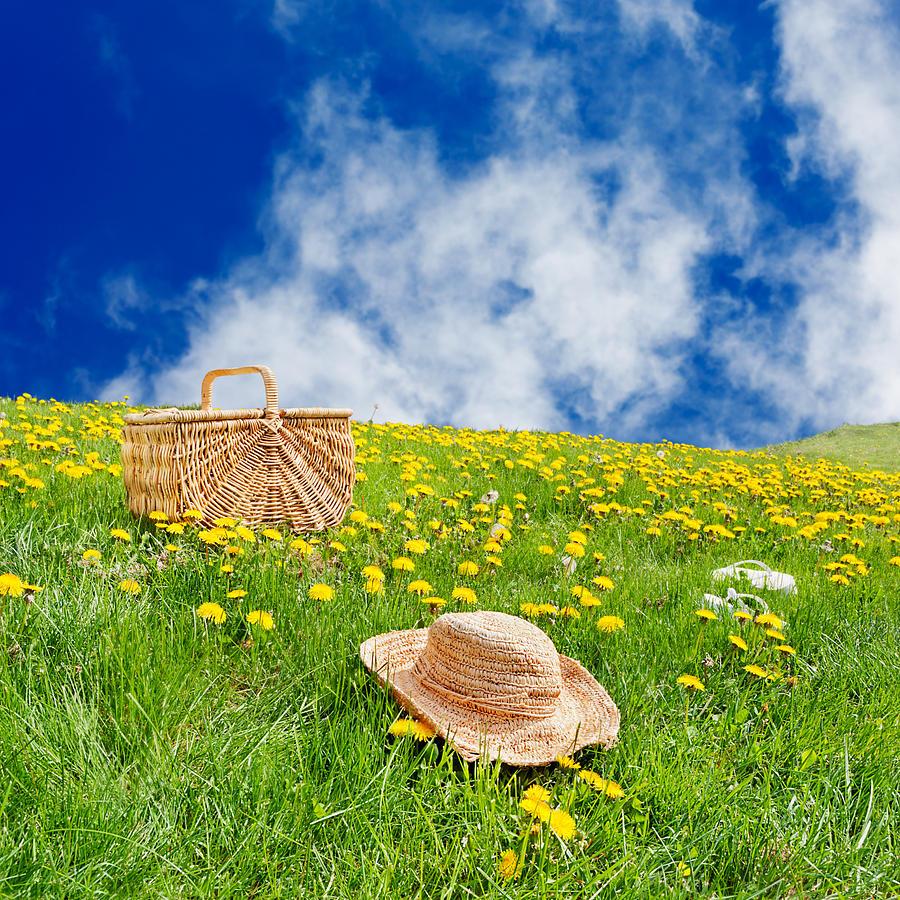 Field Photograph - Rolling Dandelion Meadow by Jo Ann Snover