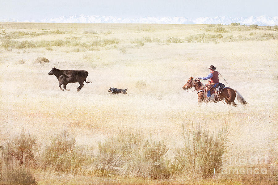 Cowboy Photograph - Round Up by Cindy Singleton