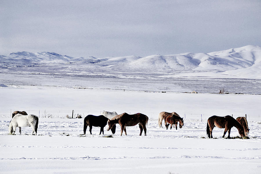 Nevada Photograph - Ruby Mountain Winter by Karen  W Meyer