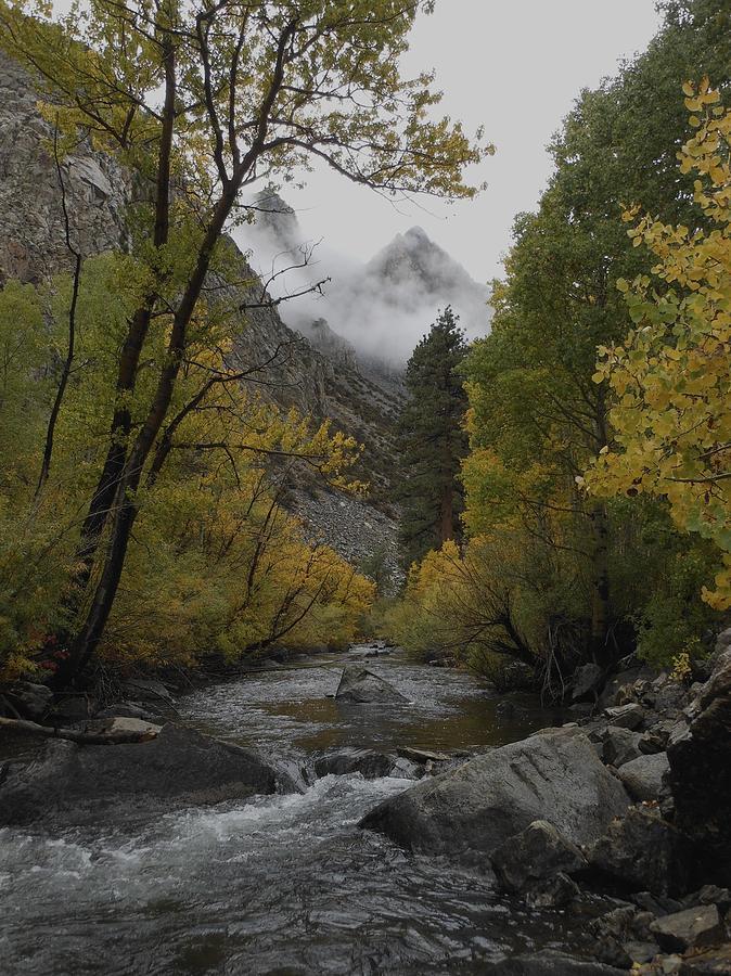 Rush Creek Aspen Trees Aerie Crag by Don Kreuter