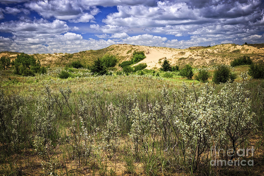 Sand Photograph - Sand Dunes In Manitoba by Elena Elisseeva