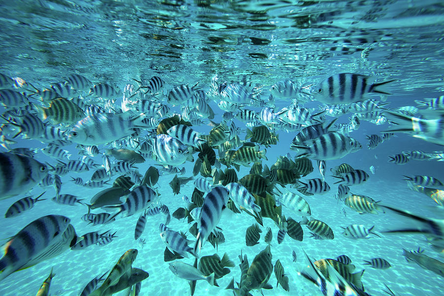 Opinion, error. striped fish images think