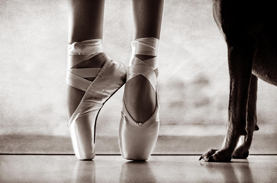 Dance Photograph - Shall We Dance by Laura Fasulo