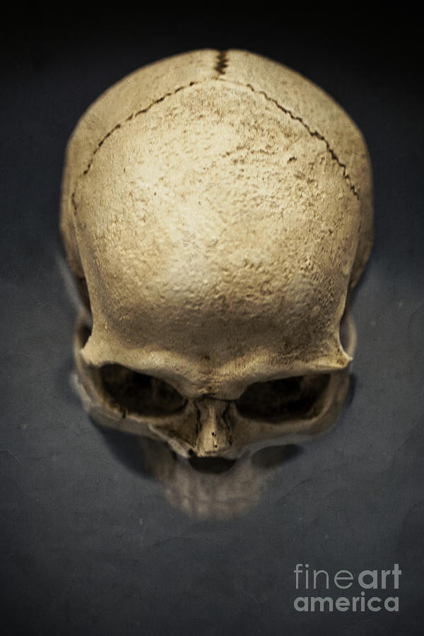 Skull Photograph - Skull  by Edward Fielding