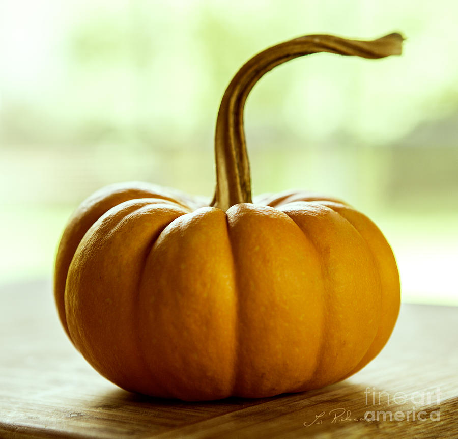 small orange pumpkin photograph by iris richardson